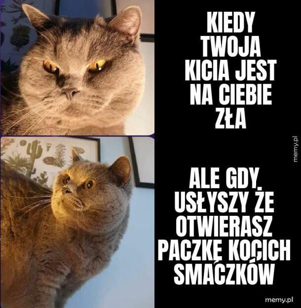 I nagle kot nie jest zły