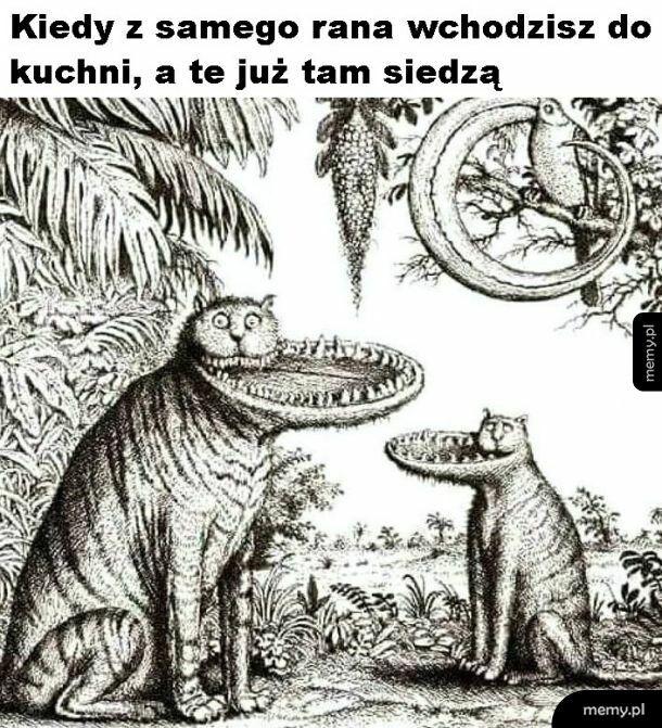 Wiecznie głodne koty