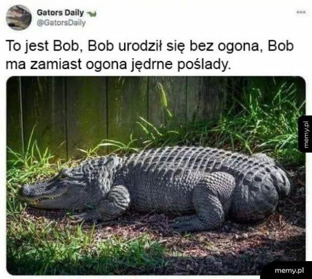 To jest Bob