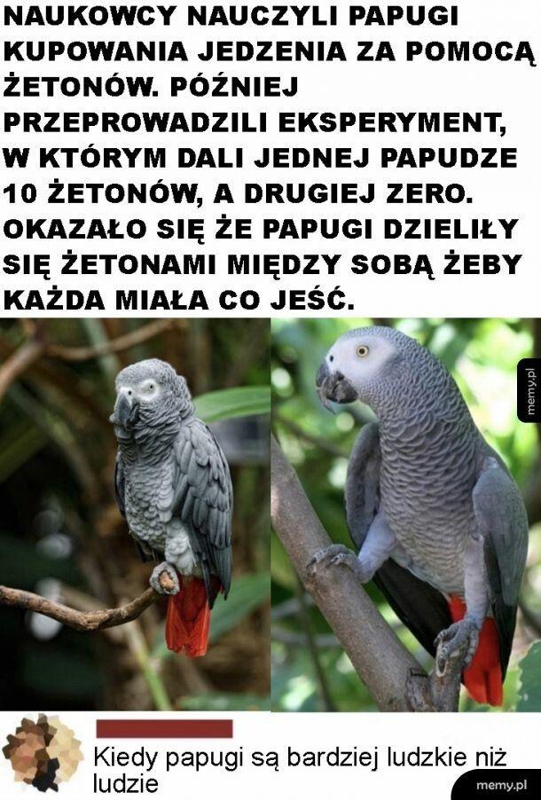 Ludzkie papugi