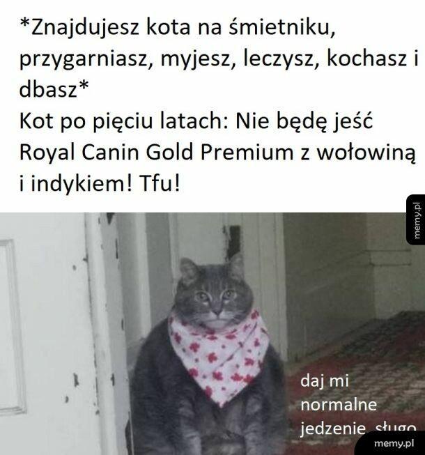 I bądź tu mądry z kotem