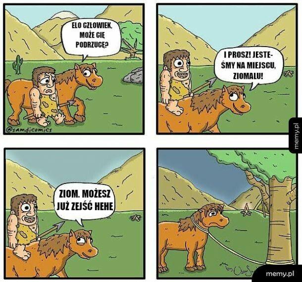 Koń, przyjaciel człowieka