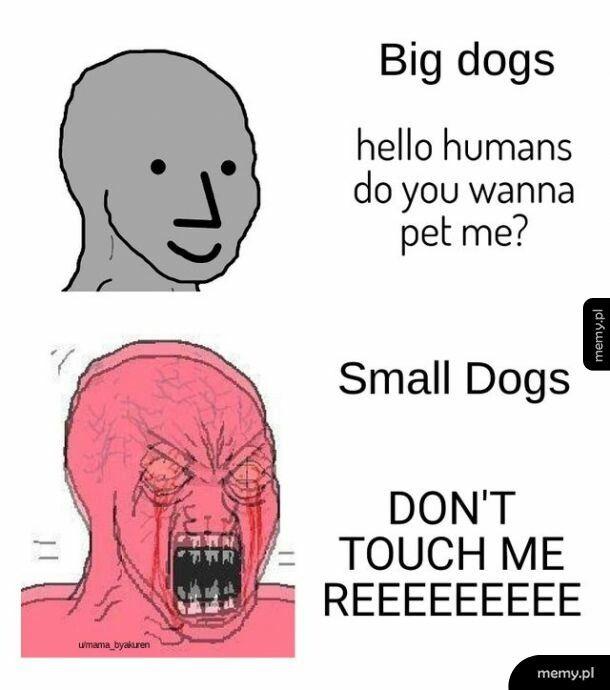 Małe psy są najgorsze