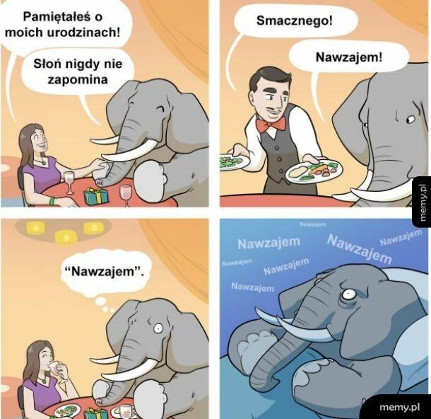 Słoń niezapominalski