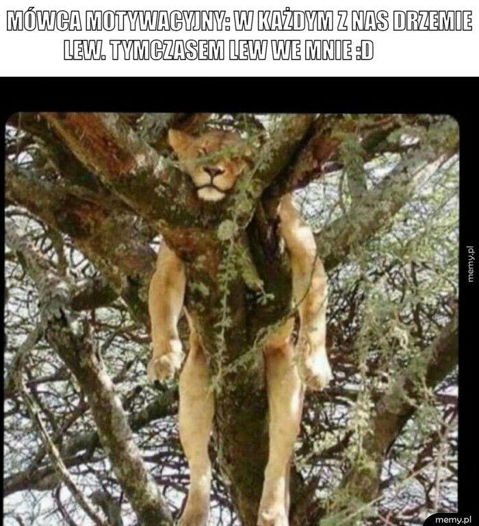 Mówca motywacyjny: w każdym z nas drzemie lew. tymczasem lew
