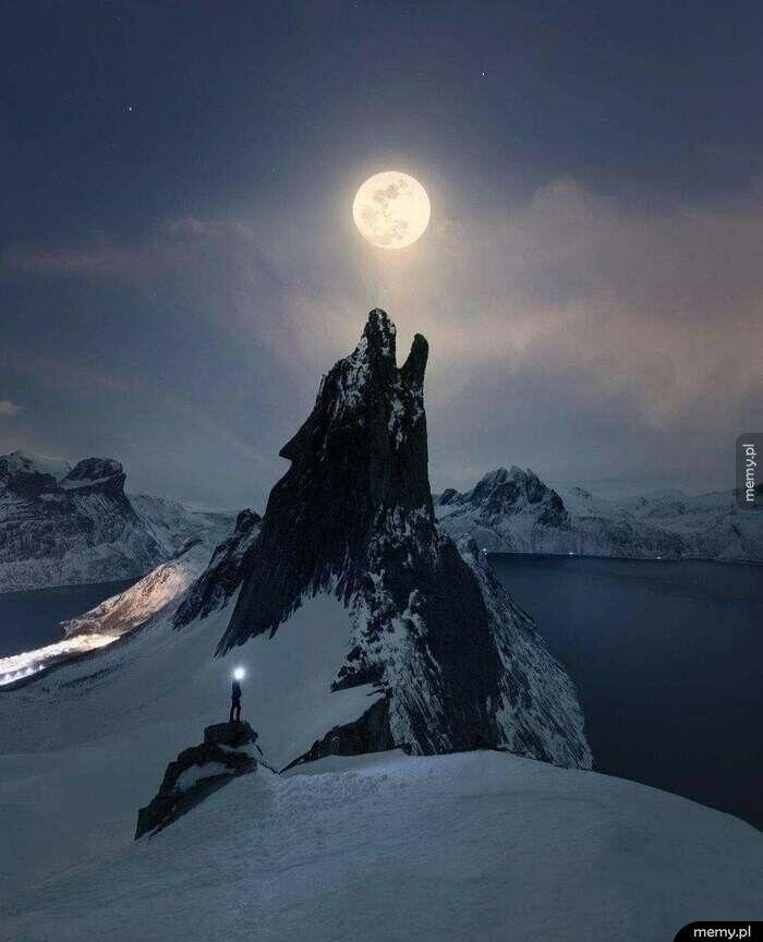 Wilk wyjący do księżyca