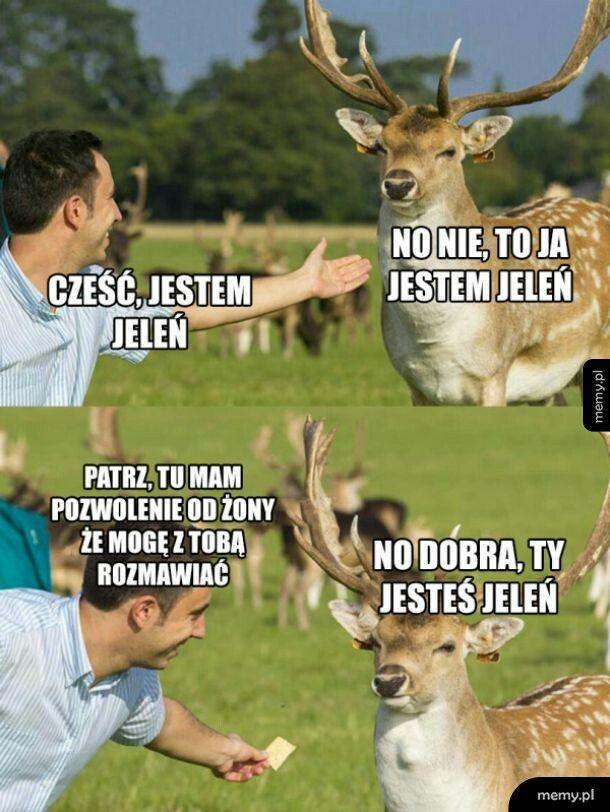 Jeleń