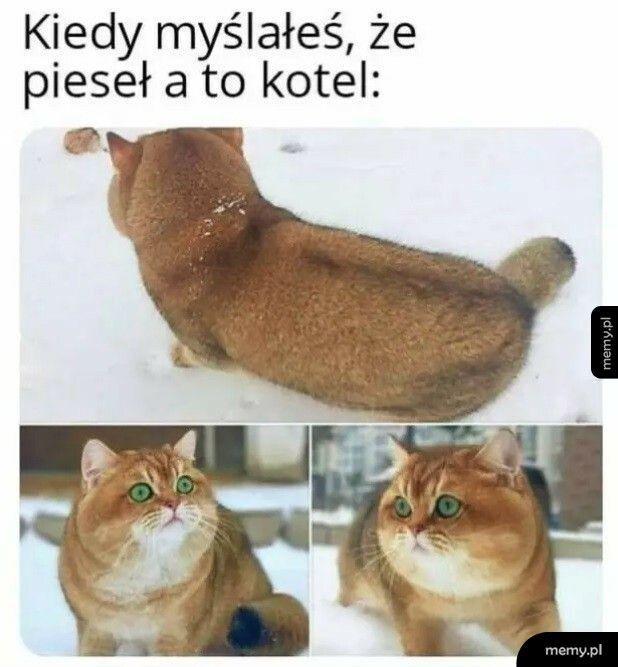 Jednak koteł