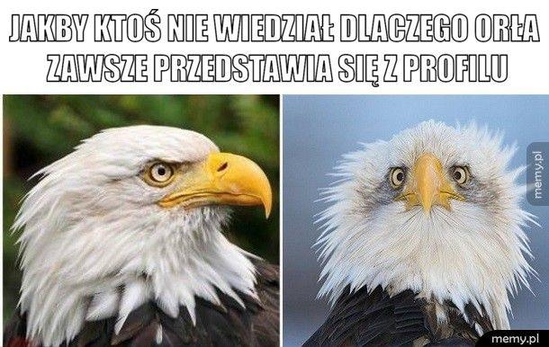 Jakby ktoś nie wiedział dlaczego orła zawsze przedstawia się z p