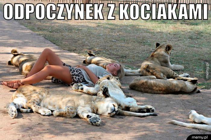 Odpoczynek z kociakami