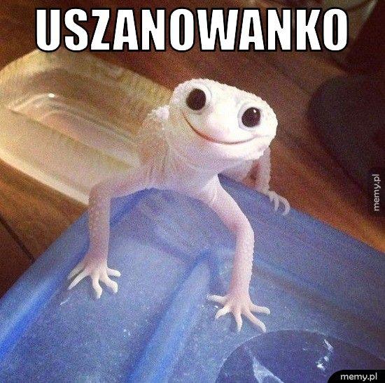 Uszanowanko