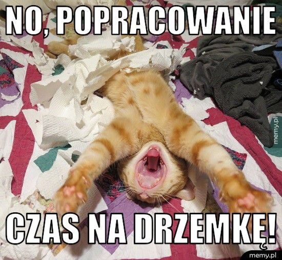 Zapracowany kotek
