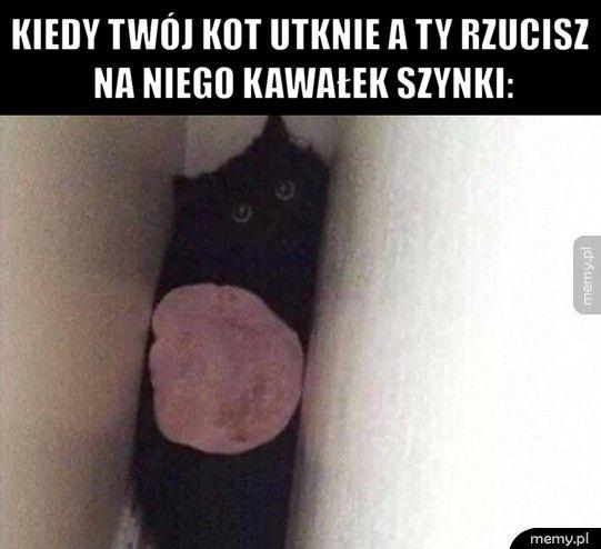 Kiedy twój kot utknie a ty rzucisz na niego kawałek szynki: