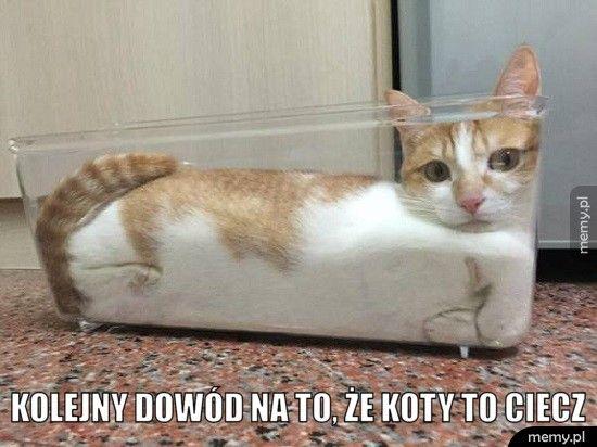 Kolejny dowód na to, że koty to ciecz