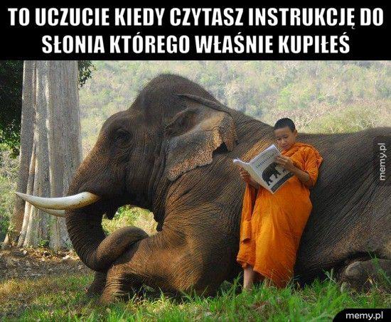 To uczucie kiedy czytasz instrukcję do słonia którego właśnie ku