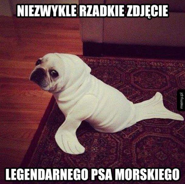 Pies morski