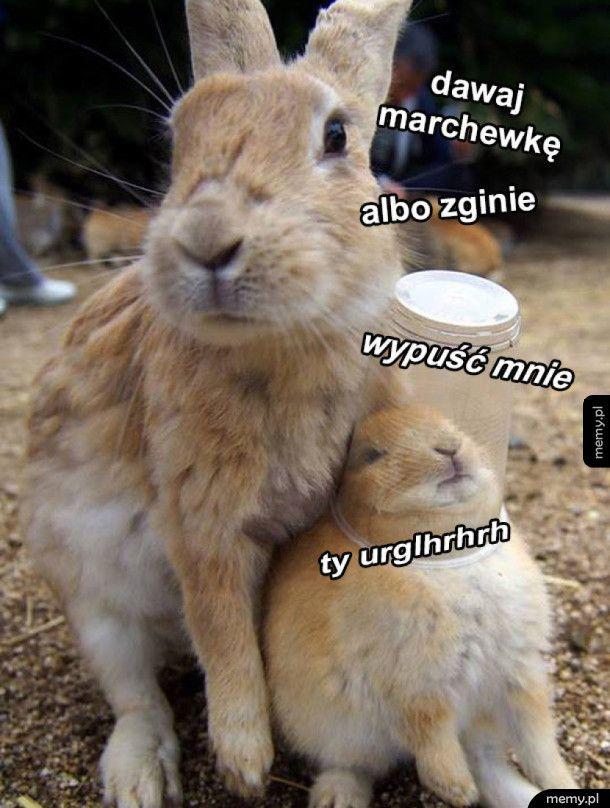 Marchewka albo życie