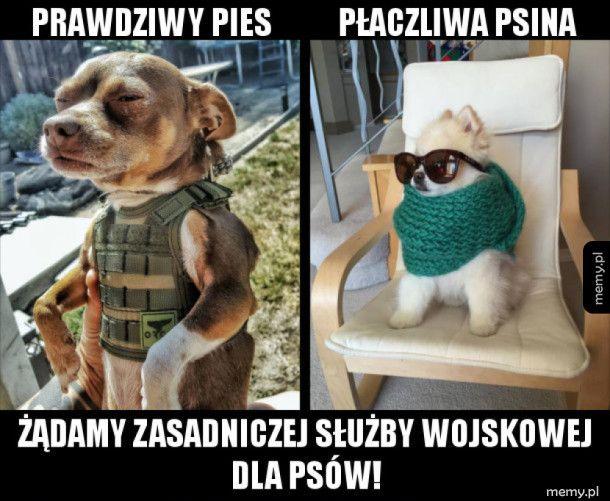 Psy do wojska
