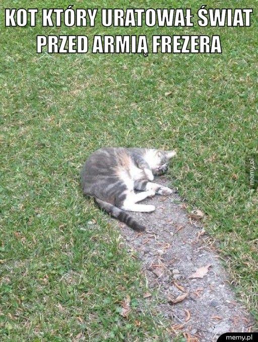 Kot który uratował świat przed armią Frezera