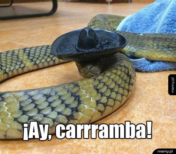 Meksykański wąż