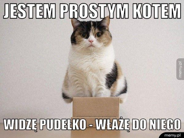 Jestem prostym kotem  Widzę pudełko - włażę do niego