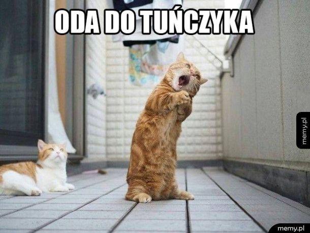 Kot śpiewak
