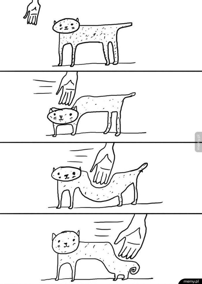 Kiedy próbujesz pogłaskać kota