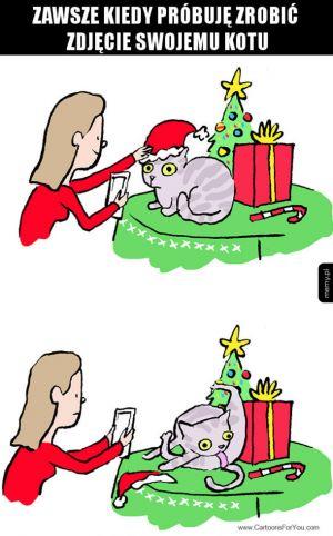 Fotografowanie kotów takie jest