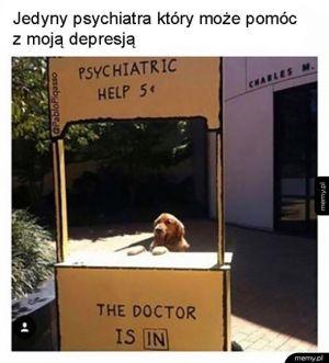 Pies najlepszym psychiatra człowieka