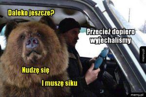 Wycieczka - Niedźwiedź jedzie na wycieczkę samochodem