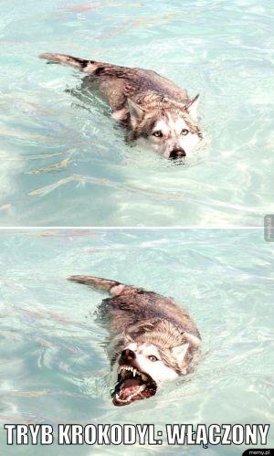 Tryb krokodyl
