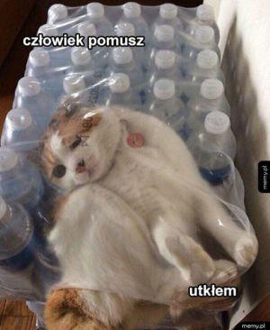 Koteł nie przemyślał