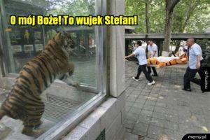 Tygrys miał wypadek w zoo