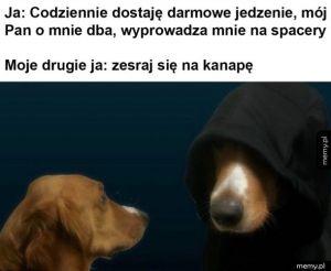 Typowe zachowanie psa