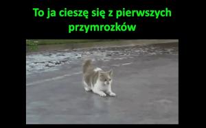Zdziwiony kotek