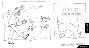 Zimowy spacer z psem