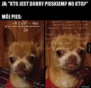 Dobry pies