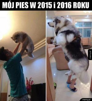 Piesek wyrósł przez rok