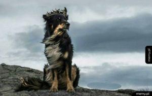 Najbardziej majestatyczny pies ever