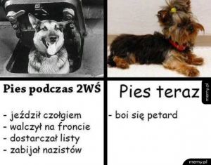 Psy kiedyś i dziś