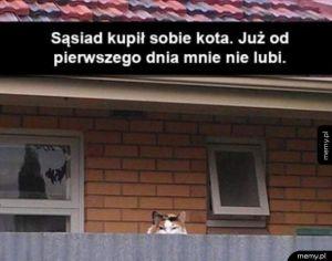 Co za kochany kotek