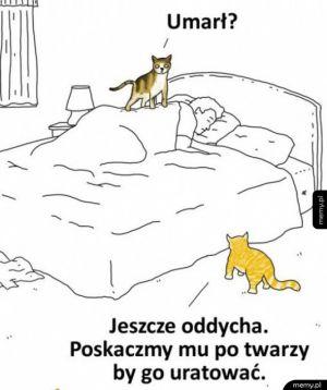 Troskliwe koteczki