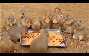 Czasz na obiad! Yum yum yum