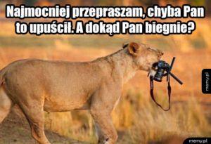 Uczynna lwica