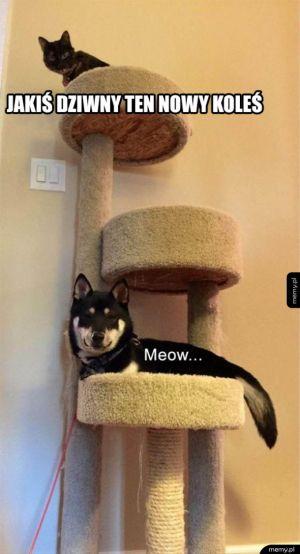 Dziwny ten kot