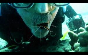 Oceaniczny dentysta