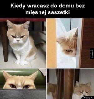 Tego się nie robi kotu