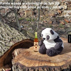 Drzewogedon