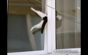 Koteł w poczasku