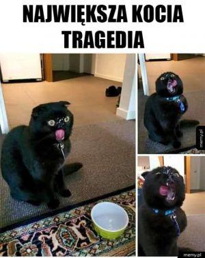 Kocia tragedia
